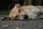 Бездомная собака, фото из архива