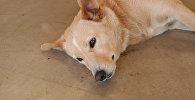 Сбитая собака, фото из архива