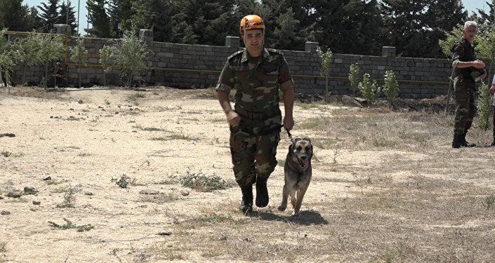 Овчарка нашла бомбу, подложенную корреспондентом Sputnik Азербайджан