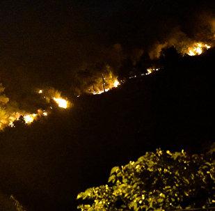Горящие деревья на Мтацминда: огонь охватил лес за считанные минуты