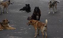 Собаки в приюте для бездомных животных, фото из архива
