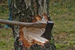 Вырубка деревьев, архивное фото