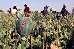 Маковое поле в Афганистане, фото из архива