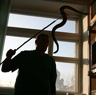 Змея в помещении, фото из архива