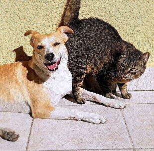 Собака и кошка, архивное фото
