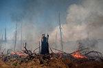 Последствия лесных пожаров, фото из архива