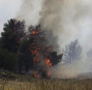Работы по тушению лесных пожаров, фото из архива