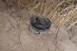 Qarqar çayının sahilində Ermənistan istehsalı olan piyada əleyhinə mina aşkar edilib