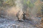 Meşə ərazisində baş vermiş yanğınların söndürülməsi, arxiv şəkli