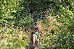 Работы по тушению лесных пожаров на территории Габалинского района