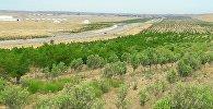 Озеленение территорий, расположенных вдоль трассы Баку-Шамаха