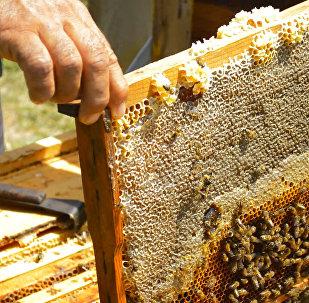 От шофера до пчеловода: житель Астары о самом хорошем меде