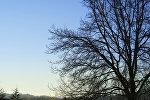 Qoz ağacı, arxiv şəkli