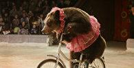 Цирковой номер с с участием медведя, фото из архива