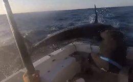 Видеофакт: голубой марлин устроил драку с рыбаком