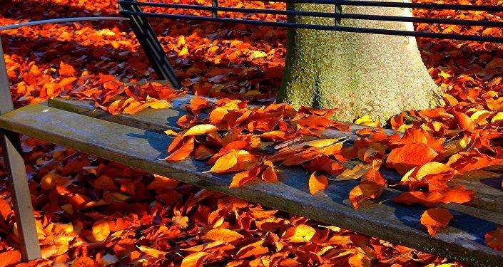 Листопад в парке, фото из архива