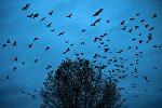 Uçan quşlar, arxiv şəkli