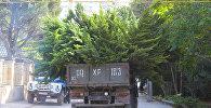 Ağac kəsimi