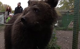 Как медведицу Дашу спасли из бродячего цирка