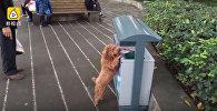 Щенок помогает собирать мусор на улице в Китае