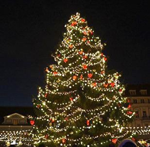 В Таллинне на Ратушной площади зажгли огни рождественской ели