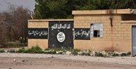 İŞİD terrorçuları