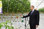 Ильхам Алиев ознакомился с работами, проведенными в BAKU AGROPARK