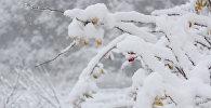 Снег укутал Гах белым покрывалом