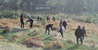 Кампания по посадке деревьев в Агдаме