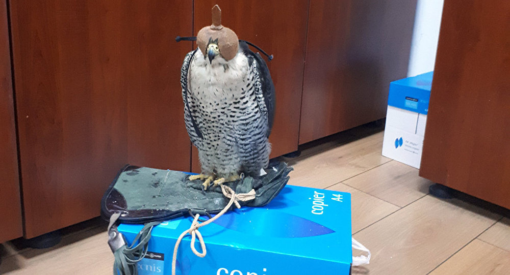 Редкая птица, конфискованная таможенниками в Международном аэропорту Гейдар Алиев в Баку