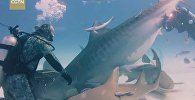 Бесстрашный водолаз покормил акулу с руки
