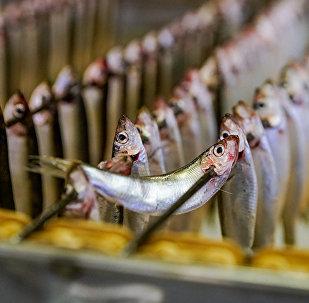 Производство шпрот на латвийском рыбоперерабатывающем предприятии Brīvais vilnis