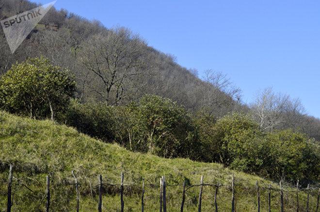 Лес на территории села Хафтони