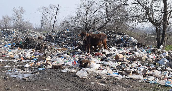 Бытовые отходы на территории Огузского района