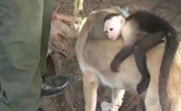 Собака приютила обезьянку
