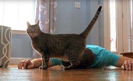 Мужчина притворился мертвым, чтобы увидеть реакцию своей кошки