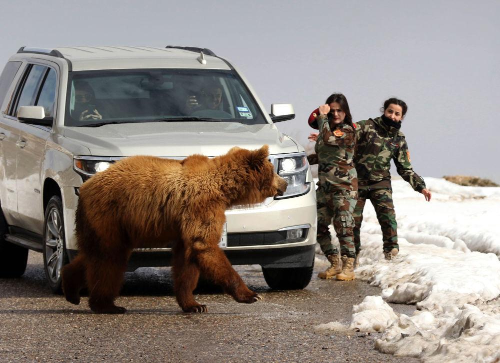 Курдские женщины-военные Пешмерга и журналисты выпускают в дикую природу медведя, спасенного активистами