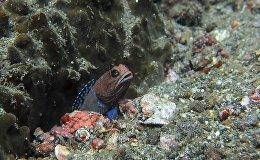 Рыба с легкостью передвигает камни в аквариуме