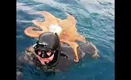 Неожиданная встреча: осьминог против дайвера